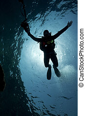 silhouette of an underwater photographer taken in the Red...
