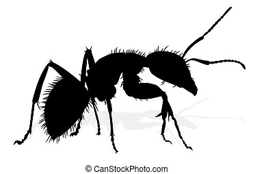Silhouette of ant.