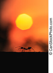 Silhouette of ant walking on the tree with sunset background