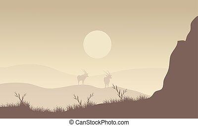 Silhouette of antelope in fields