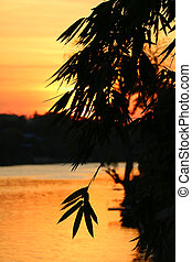 Silhouette of Bamboo Foliage against Golden Orange Sunset Sky and River