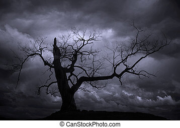 Silhouette of bare tree against blue moody sky