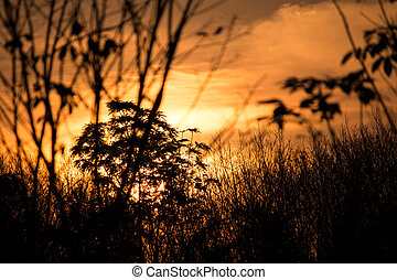 silhouette of beautiful sunset forest and sunlight in evening