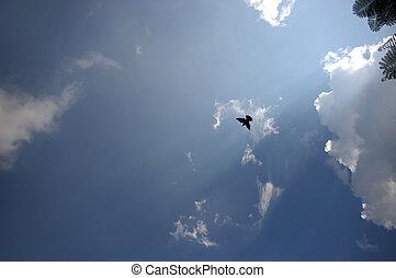 Silhouette of Bird fry under the blue sky