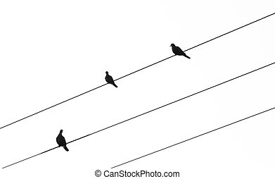 Silhouette of birds sitting on electric cables
