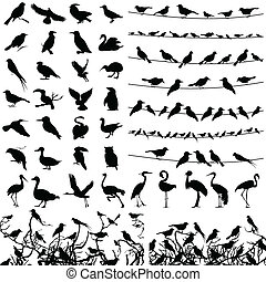Silhouette of birds - Collection of silhouettes of birds. A...