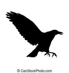 silhouette of black raven