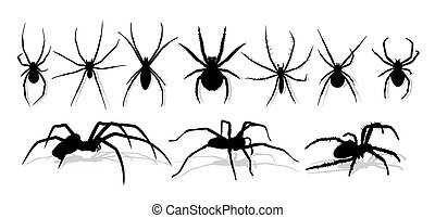 Silhouette of black spider. - Silhouette of a black...