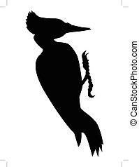 silhouette of black woodpecker - vector silhouette of black...