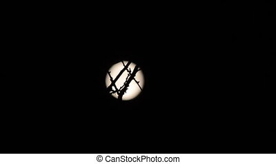 Silhouette of branch, full moon on background. Timelapse.