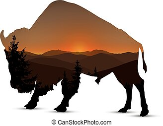 Silhouette of buffalo