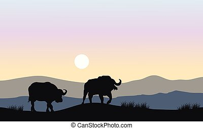 Silhouette of bull in hills