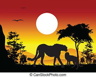 silhouette of cheetah