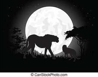 silhouette of cheetah trip