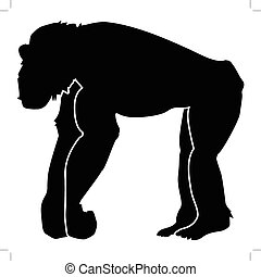 chimpanzee - silhouette of chimpanzee