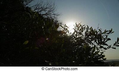 Silhouette Of Coast Plants, Qld Island, Australia - Close up...