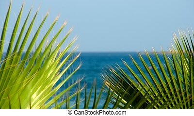 Silhouette of coconut leaf with blue sky background at...