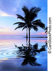 Silhouette of coconut tree near the beach when sun rising
