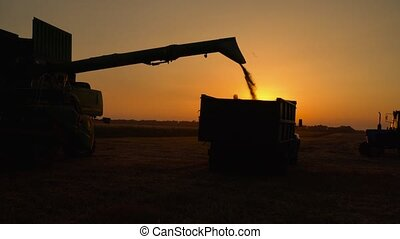Silhouette of combine harvester pours out wheat into the truck at sunset. Harvesting grain field, crop season.