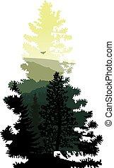 Silhouette of coniferous tree