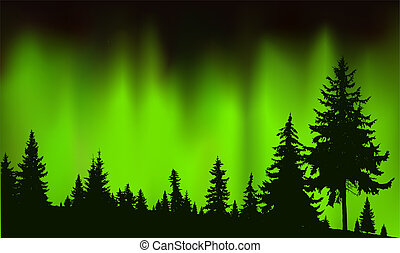 Silhouette of coniferous trees.