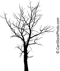 Silhouette of dead tree without leaves - Dead tree with...