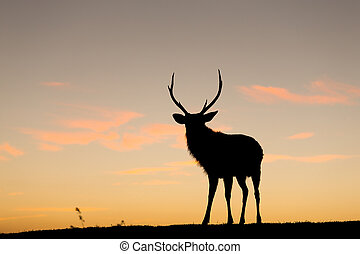 Silhouette of deer at sunset