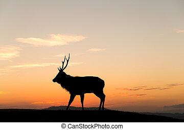 Silhouette of deer