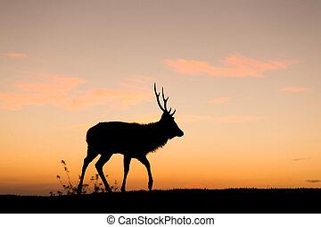Silhouette of deer under sunset