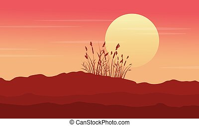 Silhouette of desert with grass at morning scenery