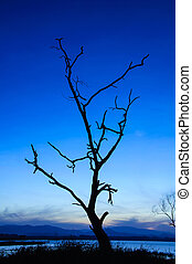 silhouette of died tree