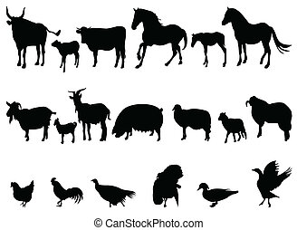 animal - silhouette of different animal