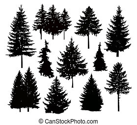 Silhouette of different pine trees.