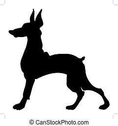 doberman - silhouette of doberman