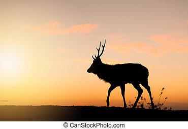 Silhouette of doe deer under sunset