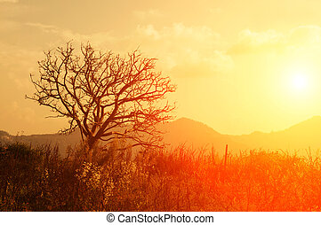 Silhouette of dying tree
