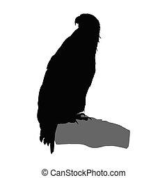Silhouette of eagle.