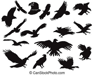 silhouette of eagles