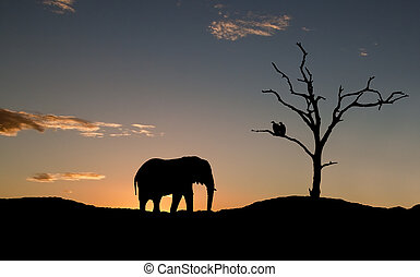 Silhouette of elephant and vultures on sunset in Africa