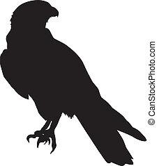 silhouette of falcon