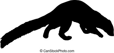 Silhouette of ferret on a white background