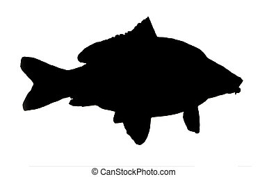 silhouette of fish of the carp isolated on white background.