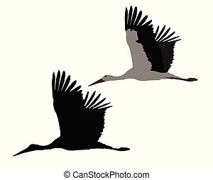Silhouette of flying stork, isolated on white background