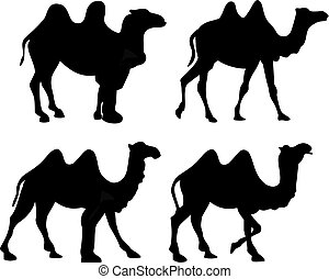Silhouette of four walking camels isolated