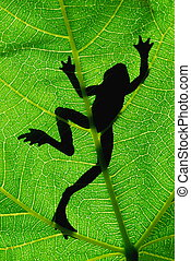 Silhouette of frog