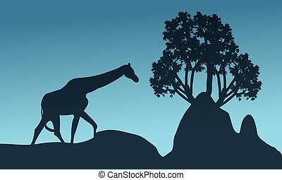 Silhouette of giraffe and rock