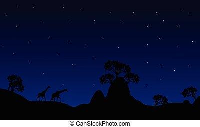 Silhouette of giraffe at night