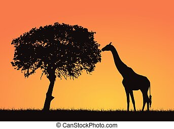 Silhouette of giraffe, grass and tree in the African safari landscape. Orange sky with space for text, vector