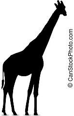 Silhouette of giraffe.