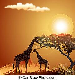 silhouette of giraffe, with jungle landscape and sun -...